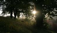 Morgensonne.JPG